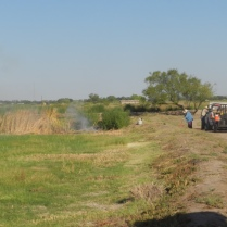 General clean up, brush & cattail removal.