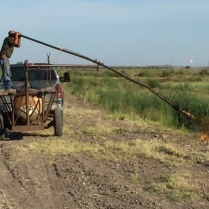 """""""MadMax"""" Cattail Removal"""